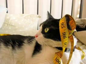 Tape Measure on a Cat [CC]