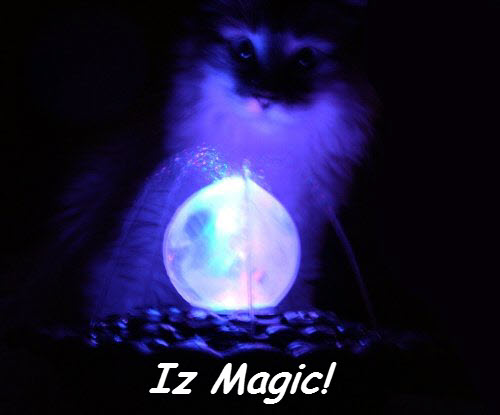 Cat Magic - Iz Magic (CC)
