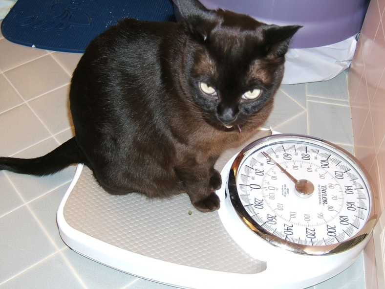 Cat on a Bathroom Scale (CC)