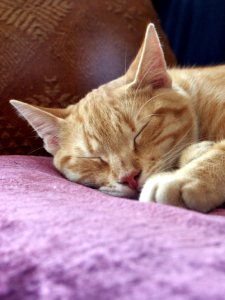 Cat sleeping on a pillow [CC]