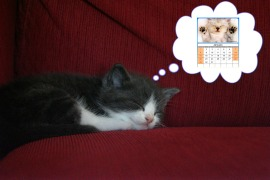 Kitty dreaming of the Cat Calendar Centerfold ©2011