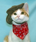 Cat - Cowboy Kitty Portrait (CC)