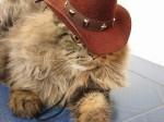 Cat - Cowboy Kitty Outlaw (CC)