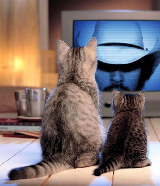 Cat - Watching a TV Western (CC)