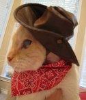 Cat - Cowboy 05 (CC)