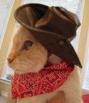 Cat - Cowboy Kitty angle 2 (CC)