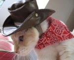 Cat - Cowboy Kitty angle 1 (CC)