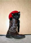 Cat - Cowboy Boot (CC)