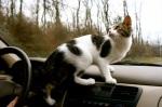 Cat Riding in Truck (CC)