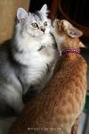 Cat Gossip (CC)