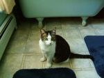 Cat in Bathroom (CC)