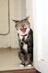 Cat LOL 02 (CC)