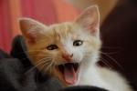 Cat LOL 03 (CC)