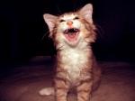 Cat LOL [CC]
