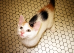 Cat on Tile Floor Looking Up (CC)