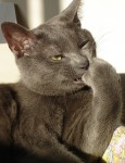 Cat Thinker - Bitch Slap (CC)