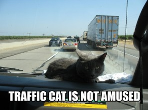 Traffic Cat is not amused (CC)
