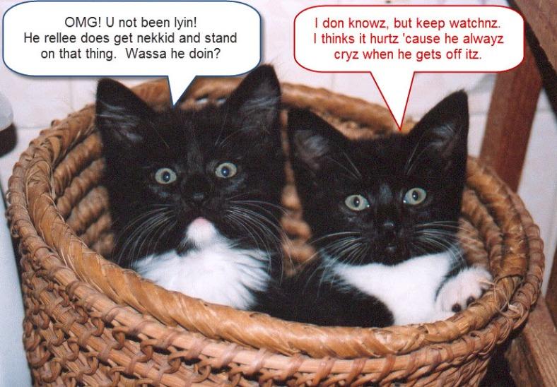 Curious Cats ©2011