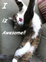 I iz Awesome ©2011