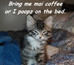 Bring me mai coffee or I poopz on the bed ©2011