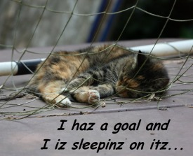 "Cat sleeping in the net of a socer goal with caption that reads ""I haz a goal and I iz sleepinz on itz."""