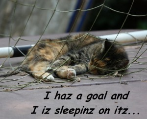 "Cat sleeping in the net of a socer goal with caption that reads ""I haz a goal and I iz sleepinz on itz."" [CC]"