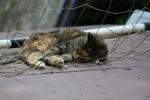 Cat Sleeping in a Soccer Goal Net (CC)
