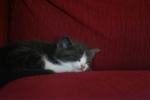 Cat Sleepy Kitty (CC)
