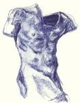 Male Torso - Drawing (CC)