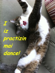 Diva Kitty practizin dance   ©2012