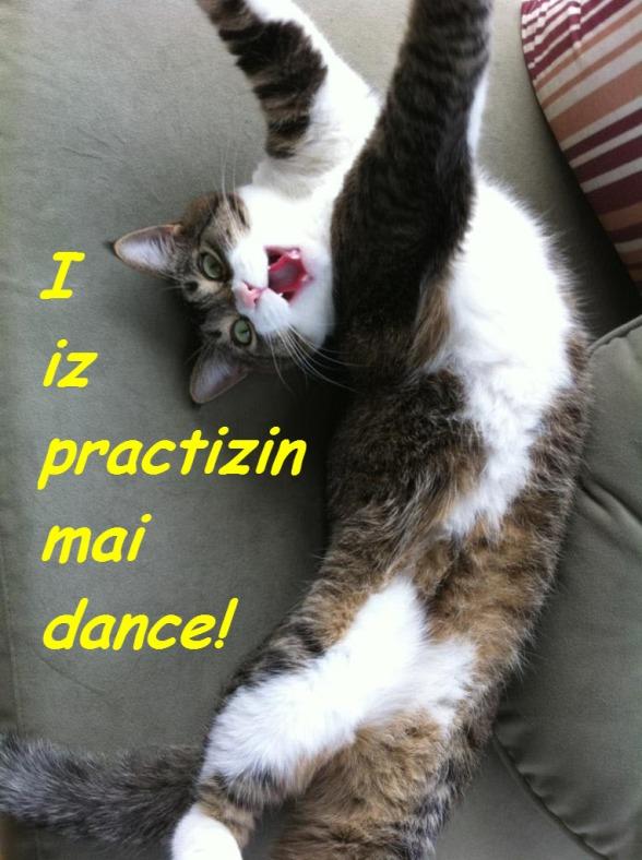 Diva Kitty practizin dance ©2012