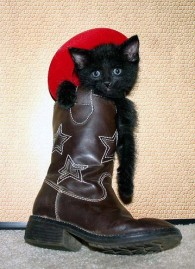 Itty Bitty Cowboy Kitty in a Big Boot (CC)