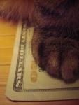 Cat - Cash Kitty - 20 Dollar Bill (CC)