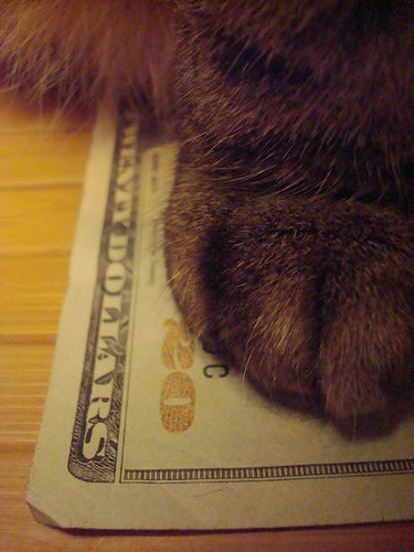 Cat - Cash Kitty - 20 Dollar Bill (CC)