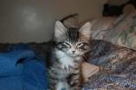 Cat Grumpy Kitty (CC)