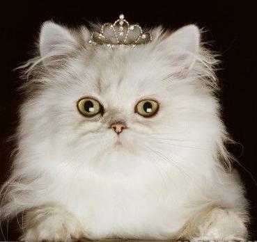 Diva Kitty (CC)
