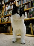 Cat in a Used Bookstore (CC)