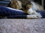 Fat Cat Sleepy Cat (CC)