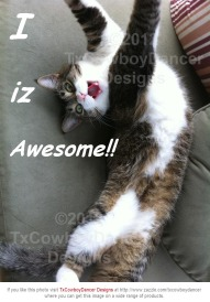 Cat Diva Kitty - I iz awesome! - with Watermark ©2012