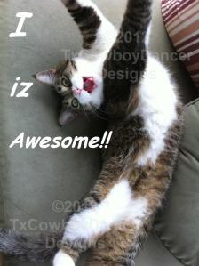 Cat Diva Kitty – I iz awesome! – with Watermark ©2012