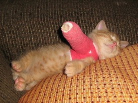Kitten in a cast (CC)
