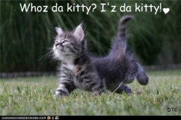 Who da kitty?  Iz da kitty!