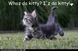 Who da kitty?  Iz da kitty!