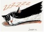 Snoring Cat