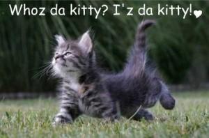 Whoz da kitty