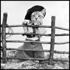 Cowboy Cat in full cowboy gear standing behind fence-SQUARE WITH BORDER (CC)
