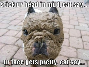LOL Cat LOL Dog Playing in Mud