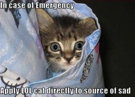 LOL kitty RX