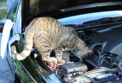mechanic-kitty
