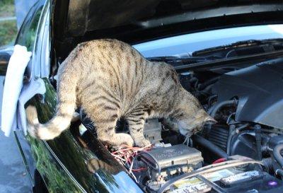 mechanic-kitty